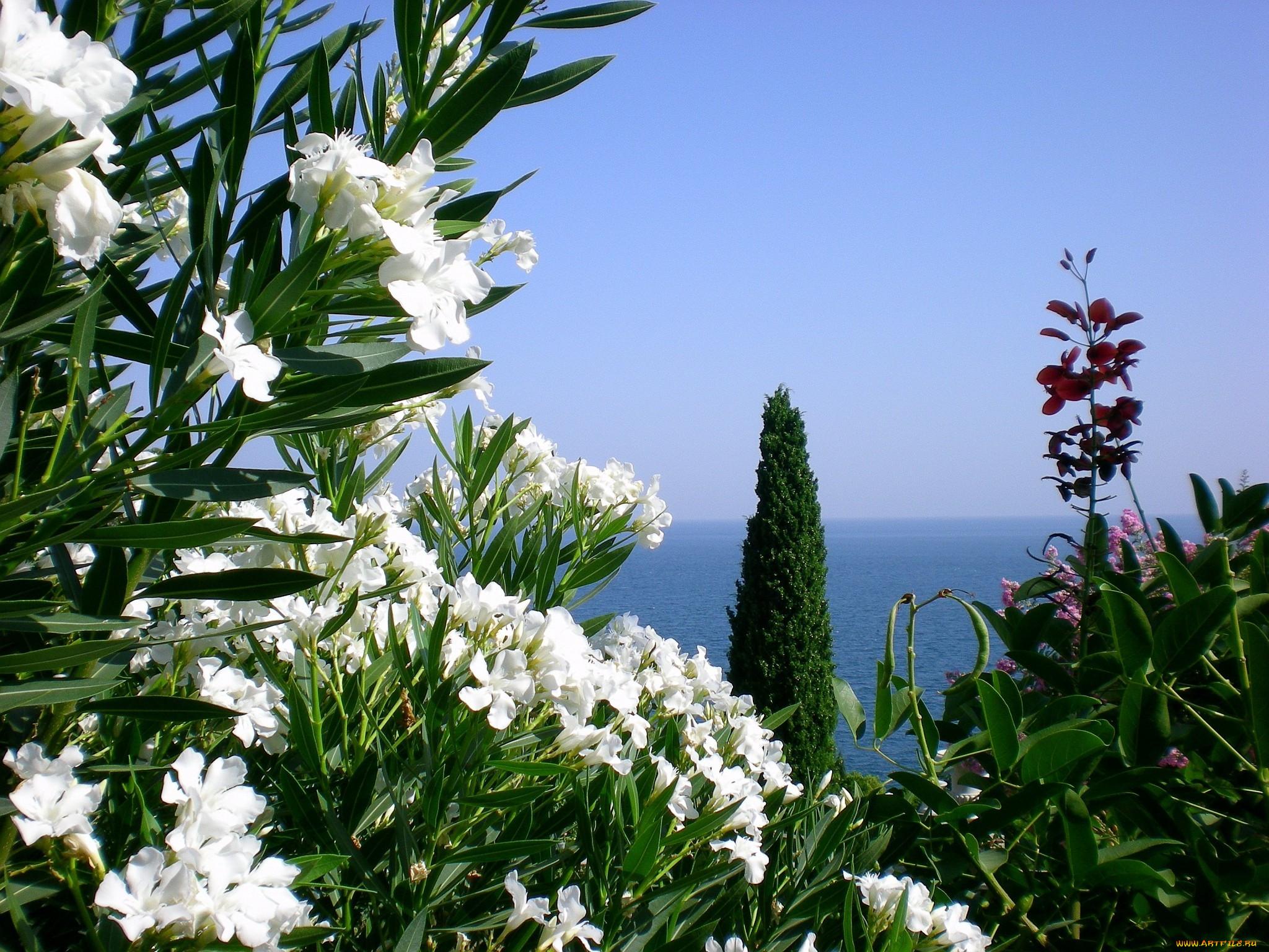 Крым природа пейзажи кипарис море